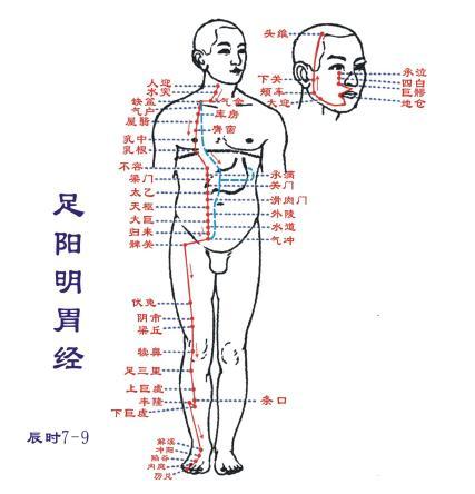 Image result for 人体经络网 足阳明胃经